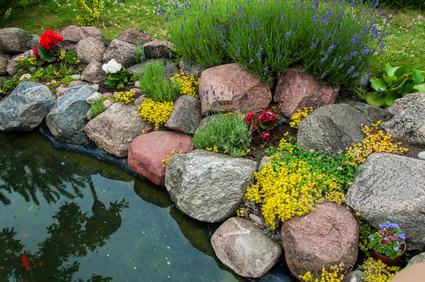 Création d'un bassin de jardin de type piscine naturelle
